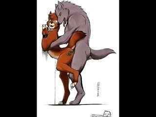 समलैंगिक प्यारे - भेड़िया