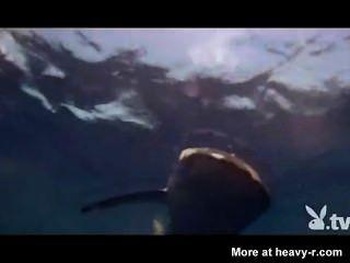 नग्न लड़कियों के एक शार्क पिंजरे में
